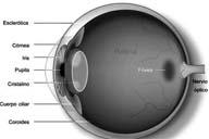 Anatomía de un ojo
