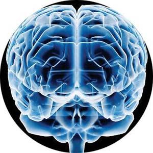 Descubierto el mecanismo neurológico de la percepción visual.